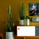 cactus plante verte artificielle