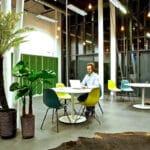 open space avec plante verte bananier fougères