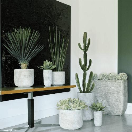 plantes-mexico-mobloo-01