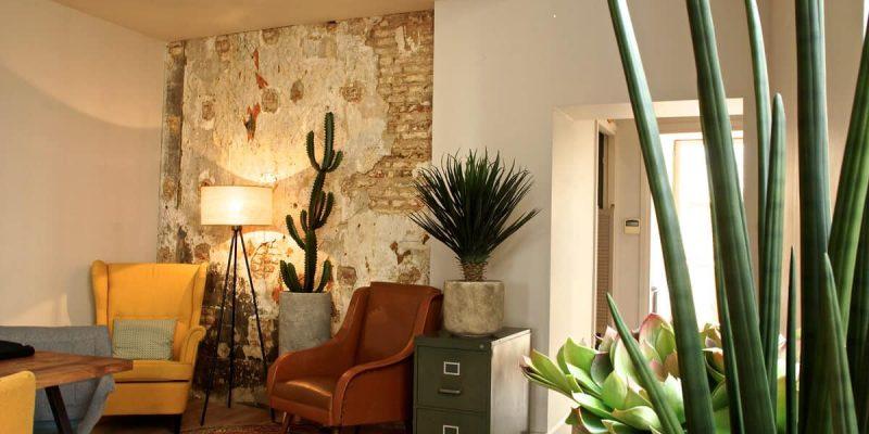 plante verte en pot yucca cactus