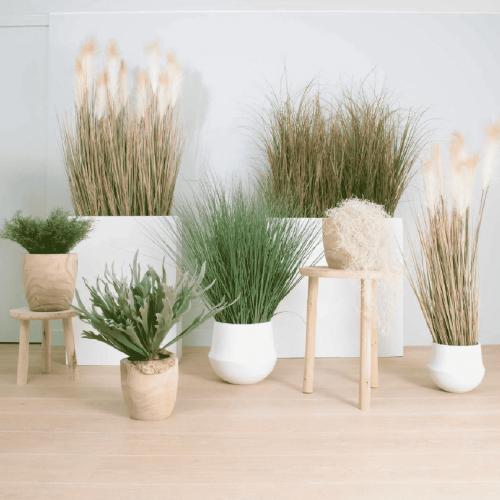 plantes-scandinave-mobloo-01