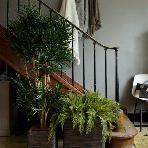 hall d'entrée plantes vertes