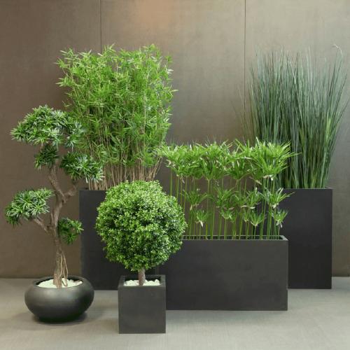 plantes-zen-mobloo-01
